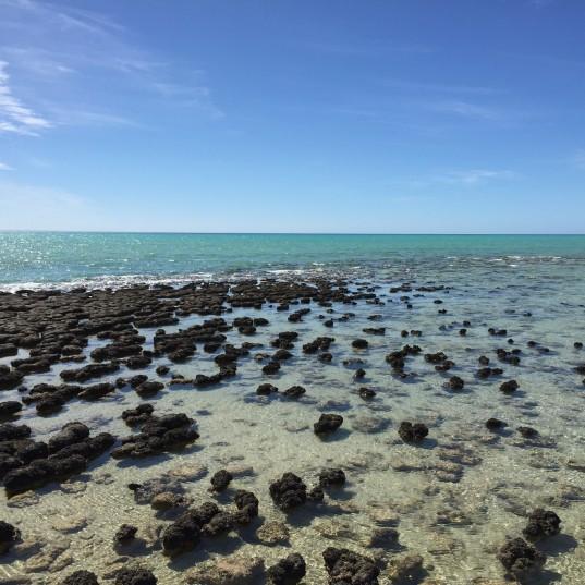 Just Jerky Fossils in Shark Bay